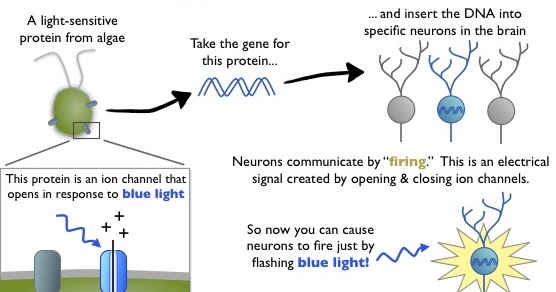 optogenetics