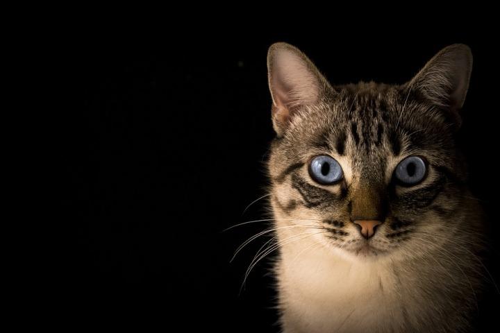cat-1728596_960_720