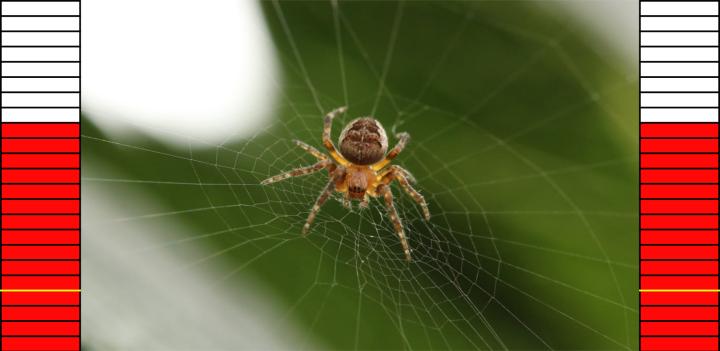 Spider Feedback