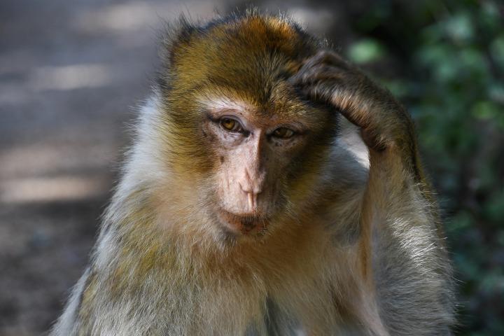 monkey-2790482_1920