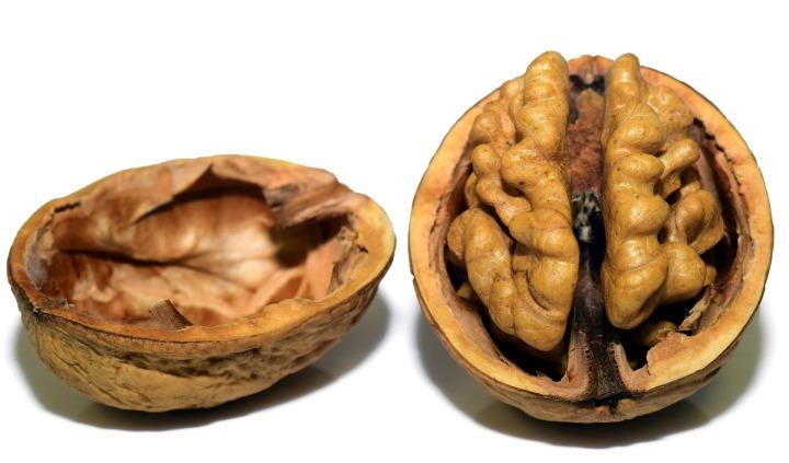 walnut-3072681_1920